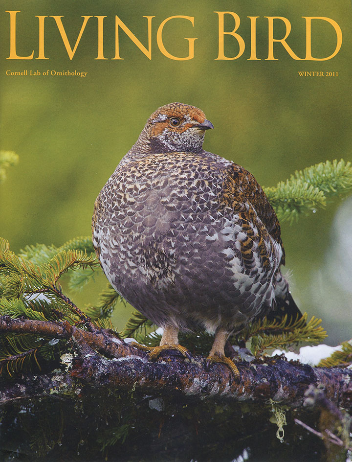 Living-Bird-cover-winter-2011